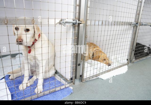 dog kennels stock photos amp dog kennels stock images   alamy