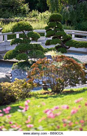 japanese dry garden stone bridge evergreen trees pruning shaping artificial landscape gardening culture duesseldorf stock