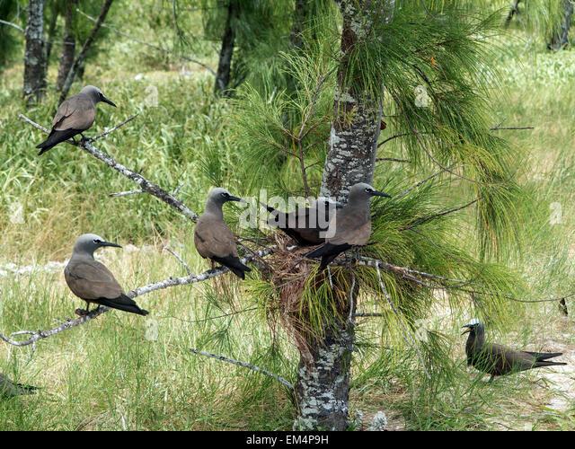 Ile aux oiseaux stock photos ile aux oiseaux stock for Miroir aux oiseaux