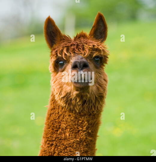 Well kept stock photos well kept stock images alamy for Happy garden scarborough maine