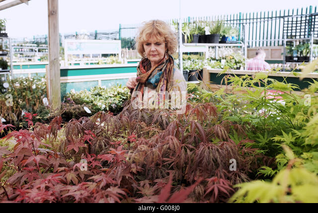 Winsome Wyevale Garden Centre Stock Photos  Wyevale Garden Centre Stock  With Entrancing Woman Looking Round A Wyevale Garden Centre Looking At Plants And Trees To  Buy  Stock With Breathtaking Secret Garden Dubai Also Mead Gardens In Addition Teak Garden Tables And Green Aluminium Garden Furniture As Well As In The Night Garden Musical Ninky Nonk Train Additionally Good Restaurant Covent Garden From Alamycom With   Entrancing Wyevale Garden Centre Stock Photos  Wyevale Garden Centre Stock  With Breathtaking Woman Looking Round A Wyevale Garden Centre Looking At Plants And Trees To  Buy  Stock And Winsome Secret Garden Dubai Also Mead Gardens In Addition Teak Garden Tables From Alamycom