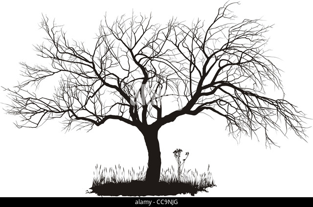 apple tree illustration. apple tree - stock image illustration