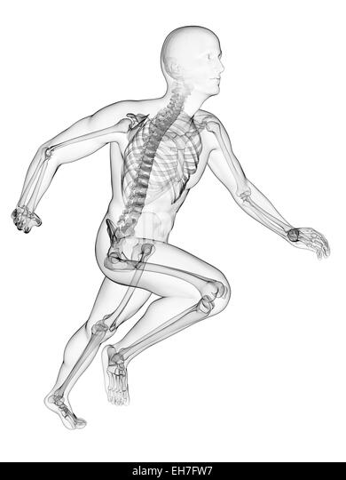 musculoskeletal black and white stock photos  u0026 images