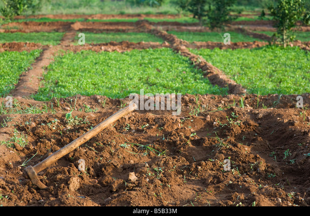 modern methods of farming in india Modern agricultural practices use mechanised equipment for irrigation, tilling and  harvesting along with hybrid seeds in india, the agriculture.