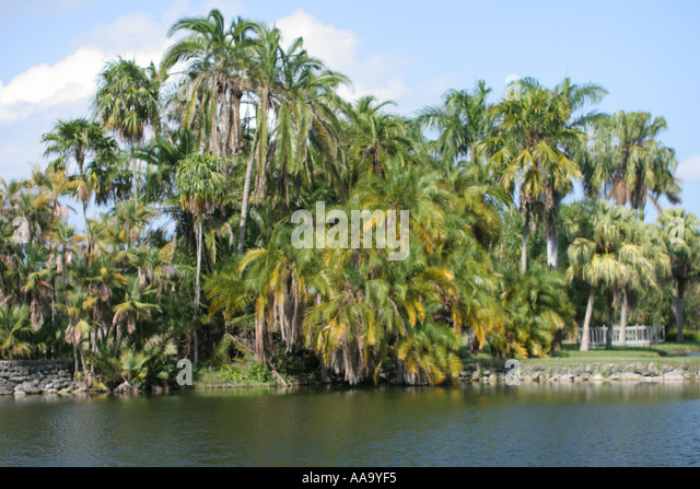 florida palm trees lake scenery stock image