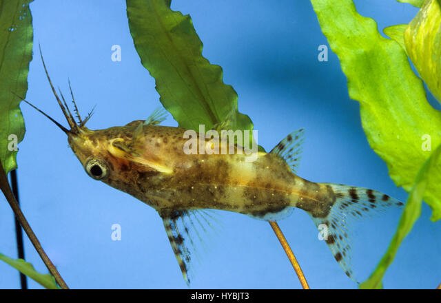 Aquaristik Stock Photos & Aquaristik Stock Images - Alamy
