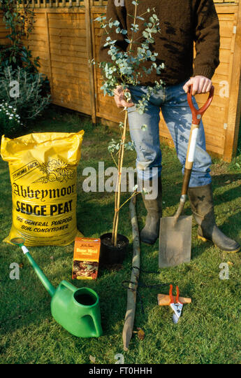 People planting tree in garden stock photos people for Tools and equipment in planting