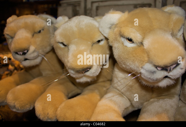 lions cubs toys stock photos lions cubs toys stock images alamy