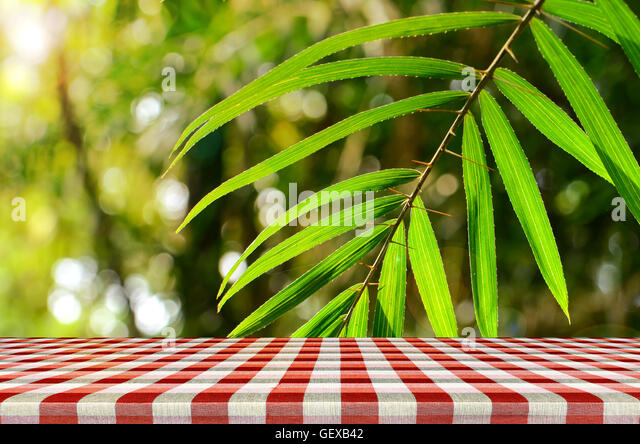 Outdoor picnic background in summer sun light  Stock Image