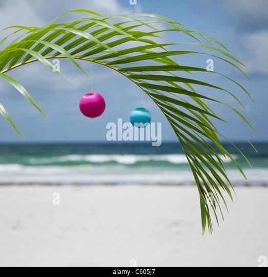 Christmas Palm Tree Stock Photos & Christmas Palm Tree Stock ...