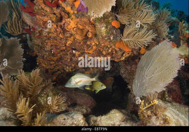 Florida reef stock photos florida reef stock images alamy for Florida reef fish