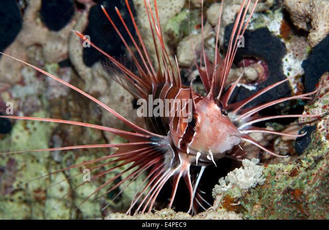 Spiny Fish Stock Photos - Image: 13401033