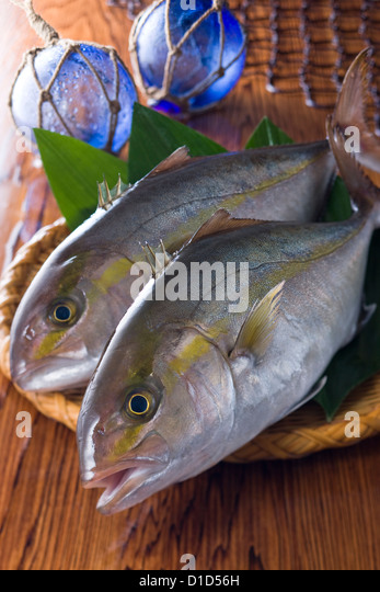 Amberjack stock photos amberjack stock images alamy for Amberjack fish recipes