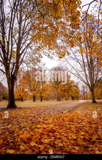 Autumn Trees Kensington Gardens London Stock Photos