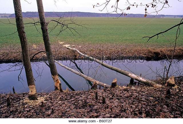 Biberrevier stock photos biberrevier stock images alamy Habitat deutschland