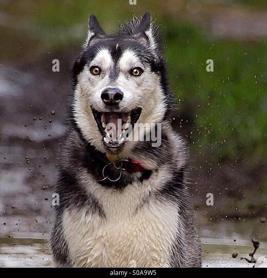 Hyperactive Puppy: Hyper Dog Stock Photos & Hyper Dog Stock Images