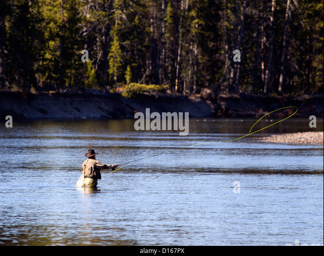 Fly fisherman yellowstone fishing stock photos fly for Fly fishing yellowstone
