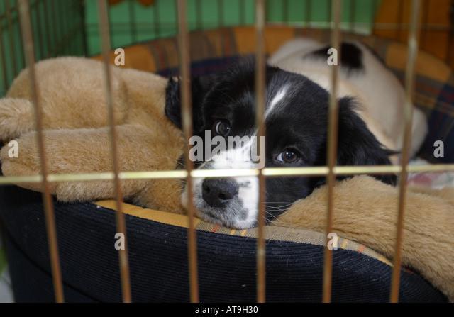 Dog Crate Stock Photos...