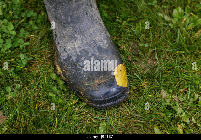 Gardening Leave Stock Photos & Gardening Leave Stock Images - Alamy
