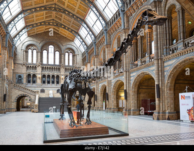 Foyer Museum Uk : Natural history museum dinosaur london stock photos