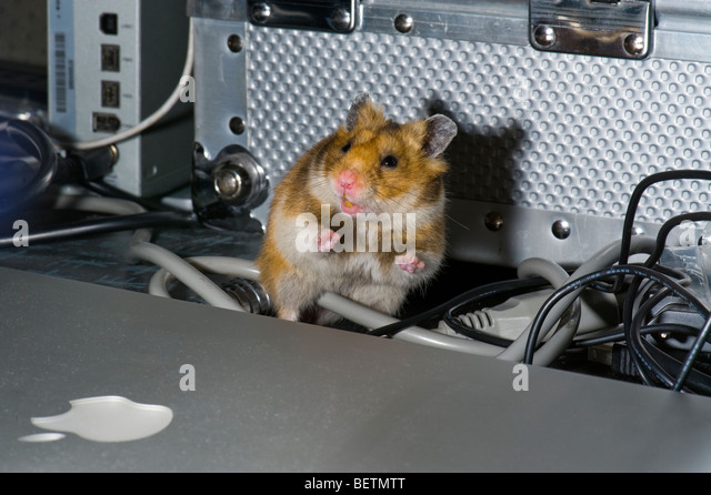 hamster cage stock photos hamster cage stock images alamy. Black Bedroom Furniture Sets. Home Design Ideas