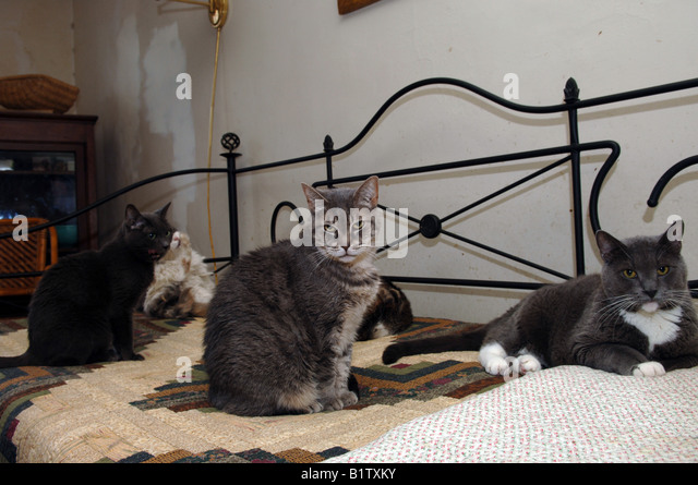 What to do with stray cat uk