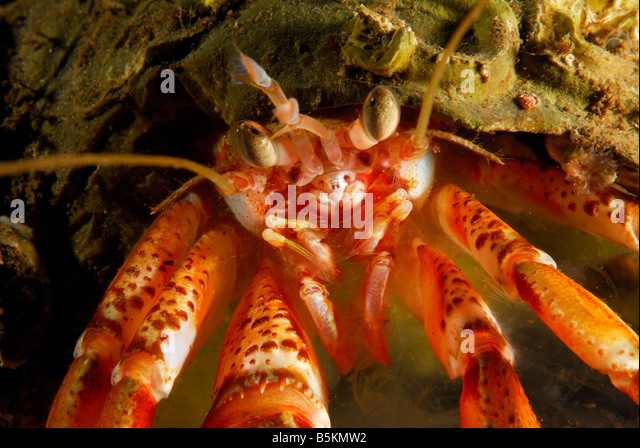 Mouth Of Crab Stock Photos Amp Mouth Of Crab Stock Images Alamy