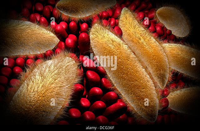 Paramecium Stock Photos & Paramecium Stock Images - Alamy