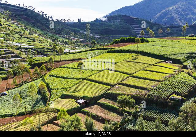 fertile soil volcano - photo #36