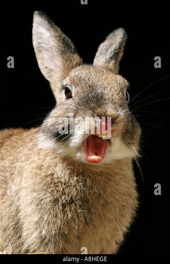 Jack Rabbit Illustration