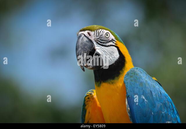 Oiseaux stock photos oiseaux stock images alamy for Oiseaux de france