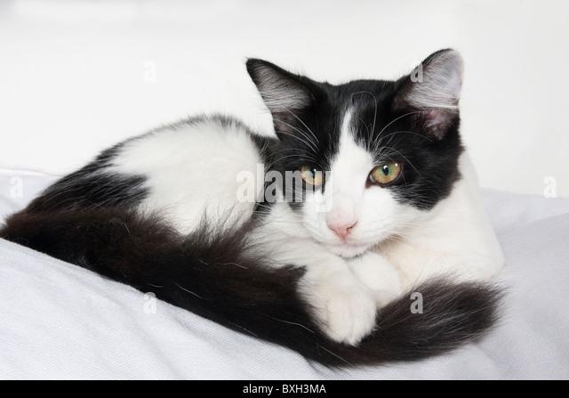 cheshire cat american mcgee