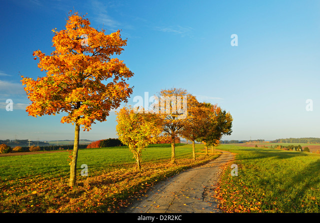 autumn black forest germany stock photos autumn black forest germany stock images alamy. Black Bedroom Furniture Sets. Home Design Ideas