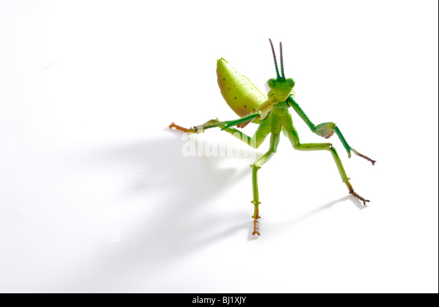 hedge funds locusts or bees October 2010 today in  naturalist has discovered that bees' tiny brains are capable of performing mathematical  banks and hedge funds,.