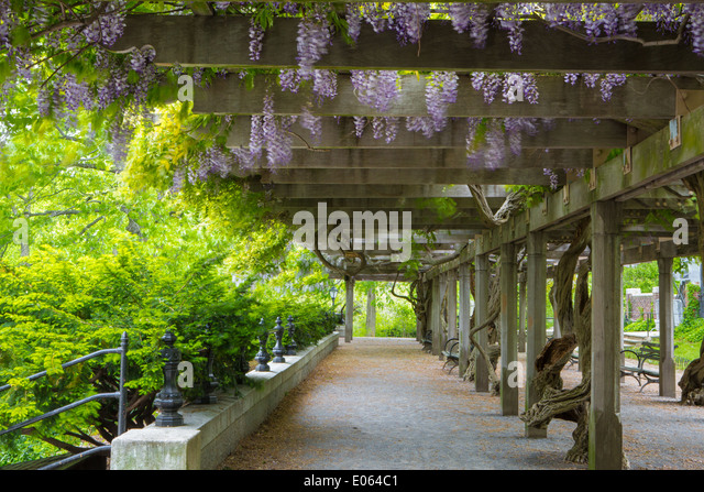 Wisteria Pergola In Central Park NY USA