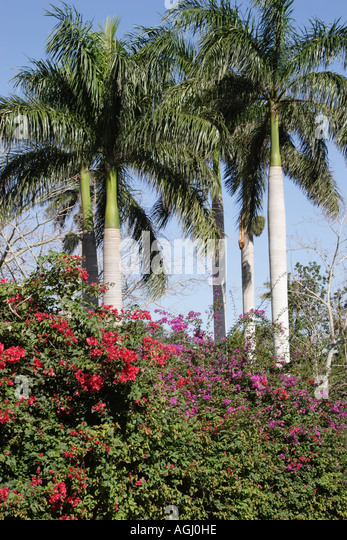 Jardin botanico cuba stock photos jardin botanico cuba for Jardin botanico nacional