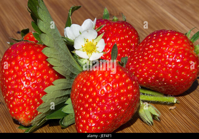 Rosengewaechs stock photos rosengewaechs stock images for Dekoration erdbeeren