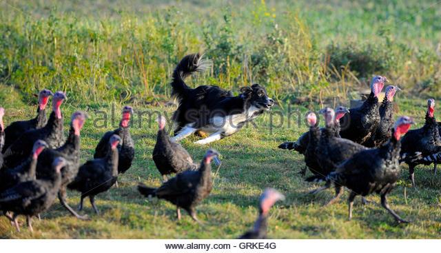 Hook up turkey