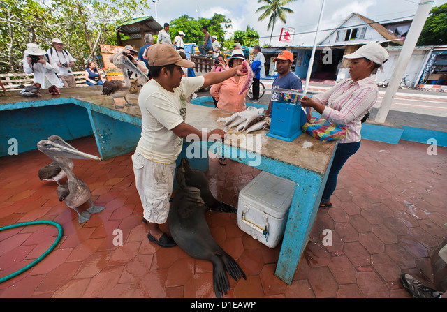 Fish markets stock photos fish markets stock images alamy for Local fish market