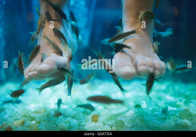 Kangal fish garra stock photos kangal fish garra stock for Fish spa treatment