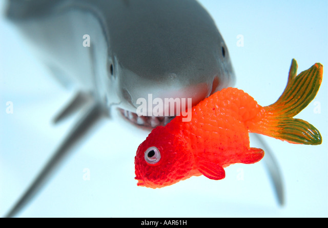 Jaws eating stock photos jaws eating stock images alamy for Big fish little fish