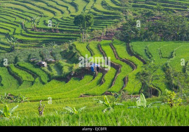 fertile soil volcano - photo #49