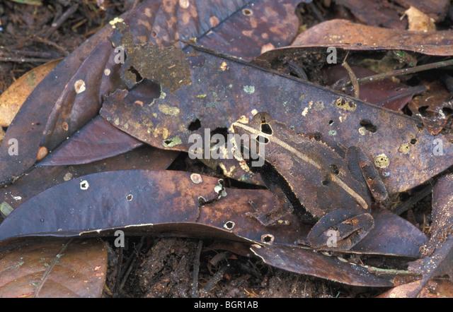 Brown Bat Stock Photos Amp Brown Bat Stock Images Alamy