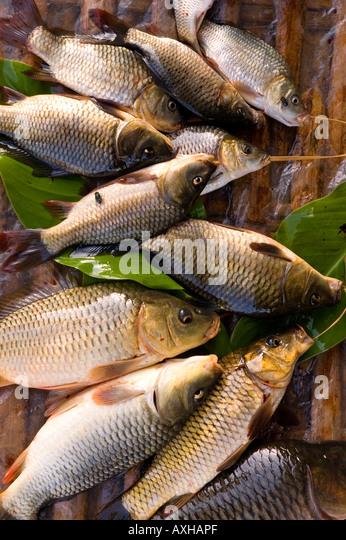 Burma carp stock photos burma carp stock images alamy for Nearest fresh fish market