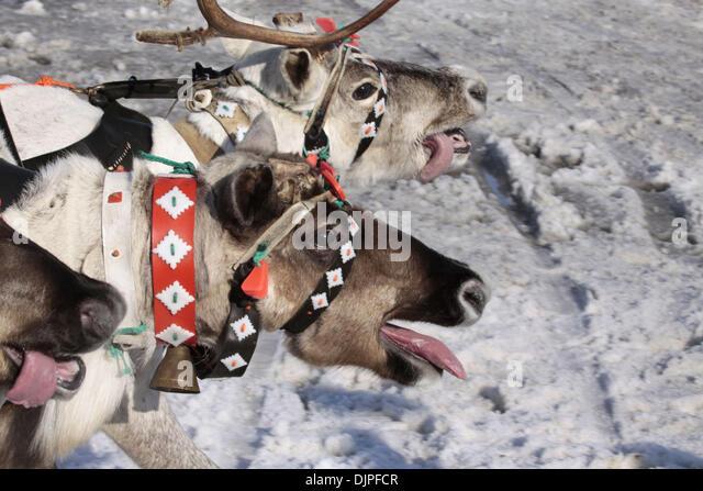 reindeer games stock photos reindeer games stock images. Black Bedroom Furniture Sets. Home Design Ideas