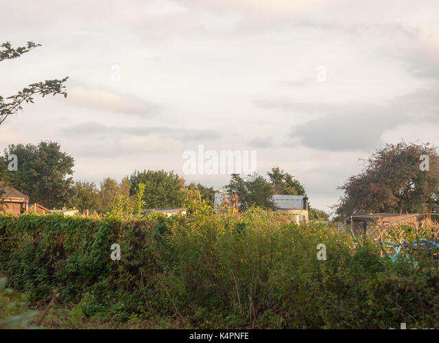 sunset over the tops of an allotment garden sheds outside essex england uk
