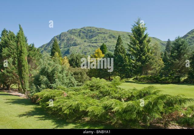 Benmore stock photos benmore stock images alamy for Garden trees scotland