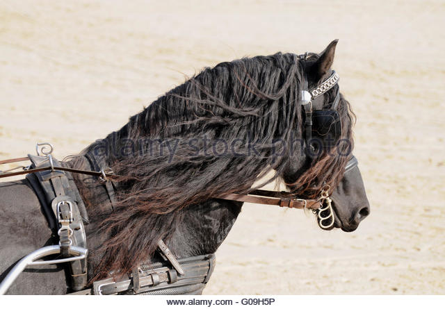 horse shoe divorced singles Dating for catholic divorced singles sign up on our online dating platform to find  divorced catholic singles near you find love in less than 10 minutes.