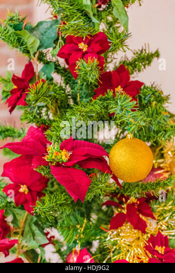 Orange euphorbia stock photos orange euphorbia stock for Red and yellow christmas tree