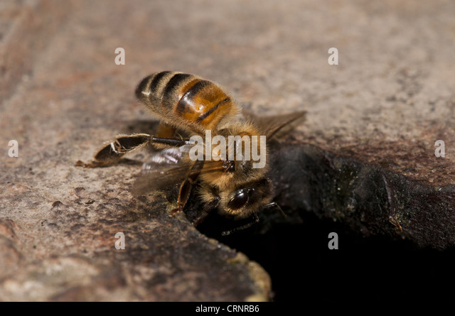 how to kill honey bee nest